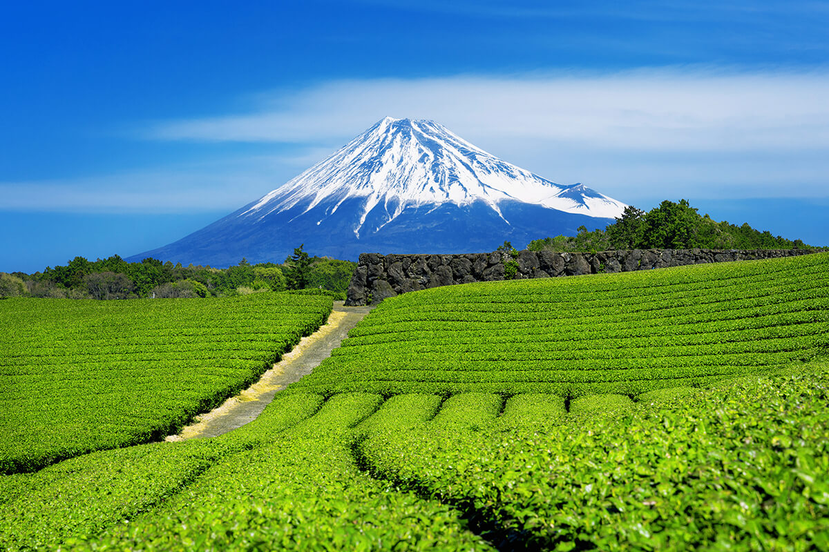 Welcome to the land of green tea!