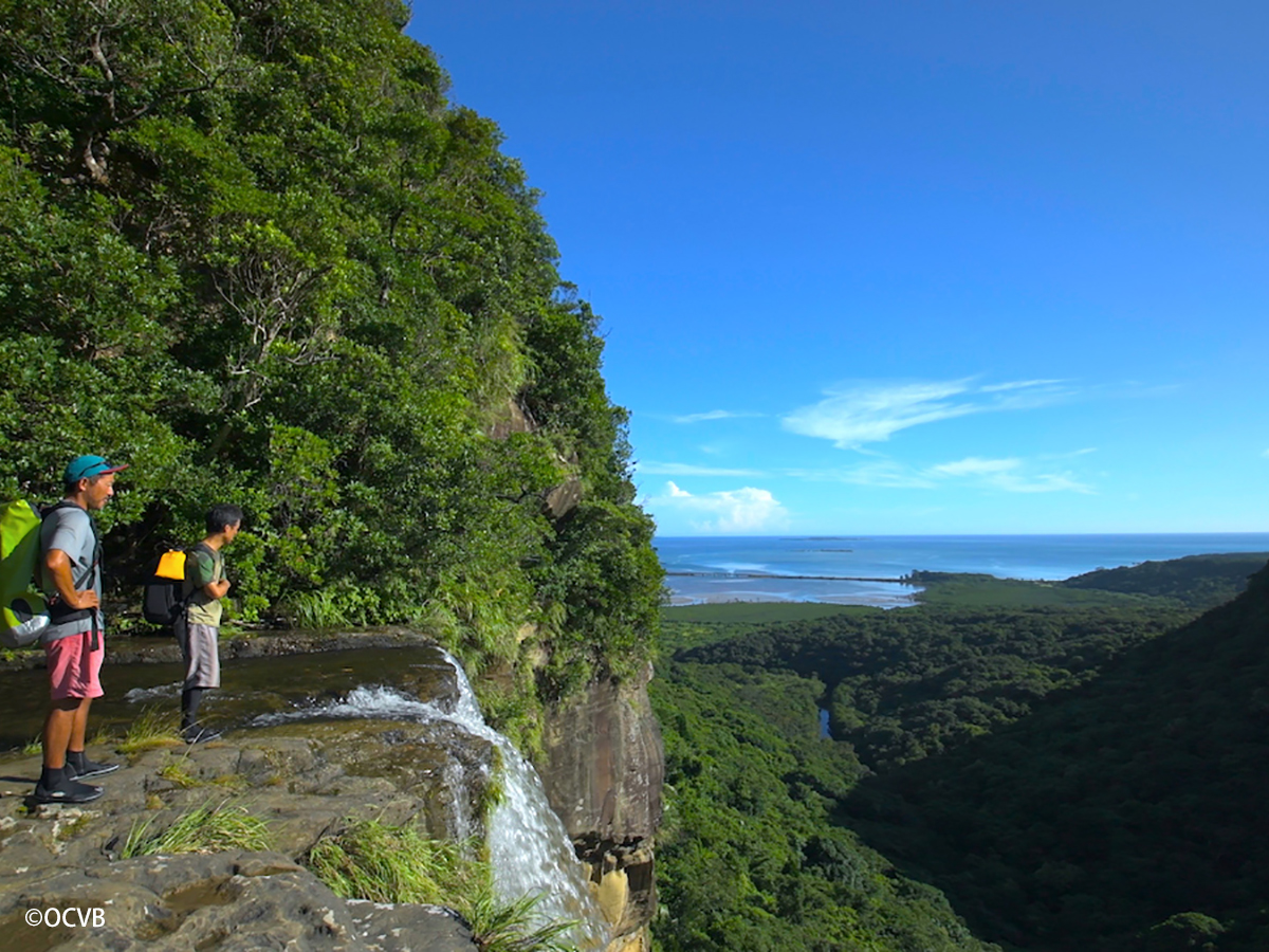 How to explore Forests in Okinawa